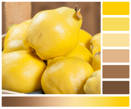 Ripe Quince Fruits In Wooden Box. Palette With Complimentary Color Swatches Stock Photo