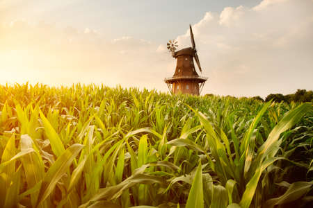 The Holtlander mill in Holtland near Hesel, East Frisia