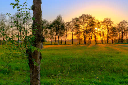 Sunset over a meadow in East Frisia