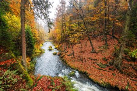 czech switzerland: The Kamnitz Gorge in Saxon switzerland national park