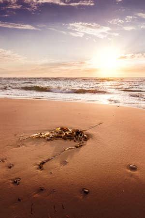 The beach at Hirtshals, Denmark