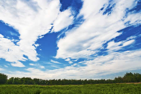 Magnificent blue sky and white cloud on green gress