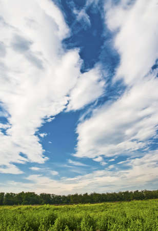 Magnificent blue sky and white cloud on green gress Stock Photo - 7366694