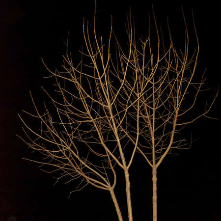Tree at Night 스톡 사진