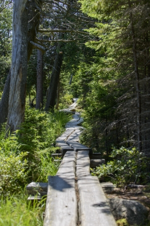 national scenic trail: Scenic boarded hiking trail through remote forest in Acadia National Park. Stock Photo