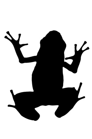 dart frog: Vector graphic silhouette of an Azure Poison Dart frog.
