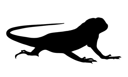 silhouettes: Vector graphic silhouette of a baby iguana. Illustration