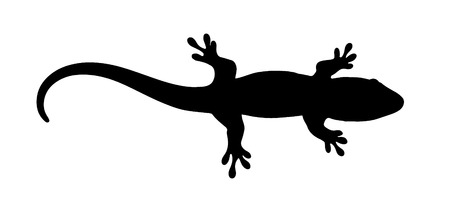 Vector graphic silhouette of a baby Madagascar day gecko. 일러스트