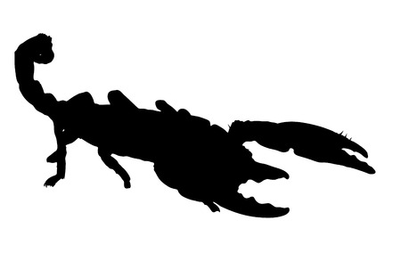 Vector outline of an Emperor Scorpion.