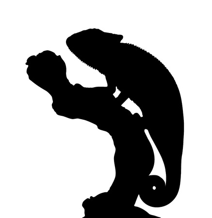 Vector graphic outline of a graceful chameleon perched on a branch. 向量圖像