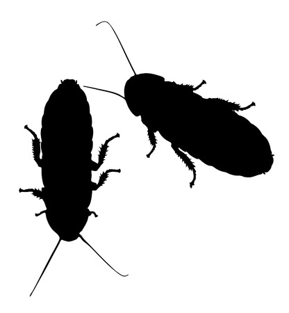 hissing: Vector graphic outline of two hissing cockroaches.