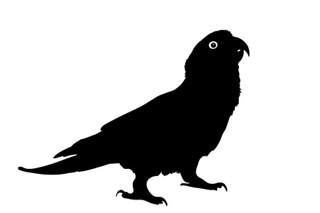 Vector graphic outline of a paradise gold capped conure. Ilustracja