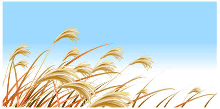 This illustration is a common natural landscape. Grass Blades against Blue sky Stock Vector - 15879822