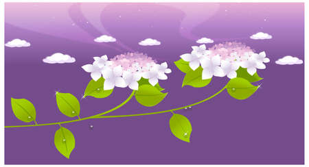 This illustration is a common natural landscape. White flower and leaf background Stock Vector - 15881398