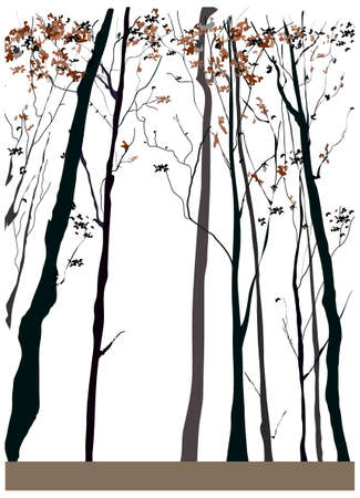 this illustration is the general nature of the winter landscape. Dry tall trees  Vector