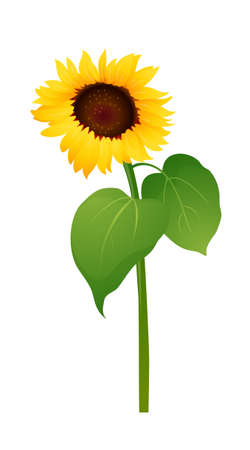 icon sunflower Vector