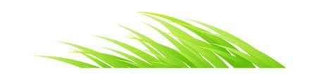 icon leaf Stock Vector - 15894574