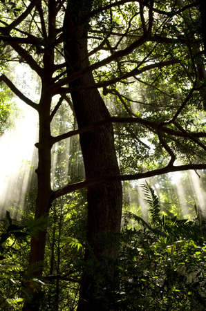 Sun beams cutting through volcanic mist in tropical forest  photo