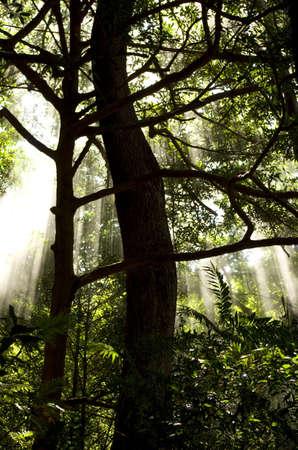 cutting through: Sun beams cutting through volcanic mist in tropical forest