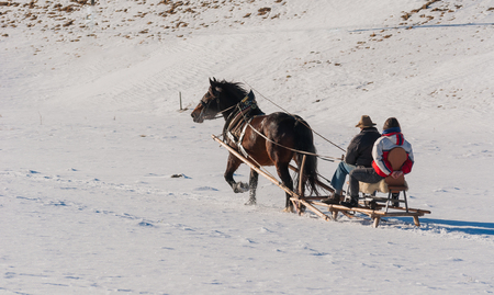 Horse pulls a wood sleigh on snow