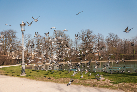 sunny day of early spring, little lake in park with many flying pigeons