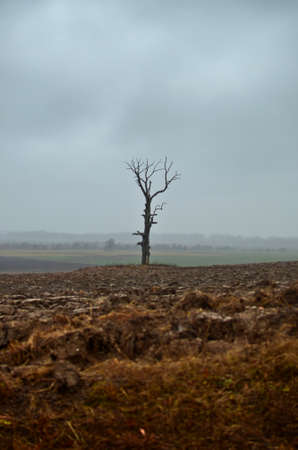 Lonely tree in dramatic horizon