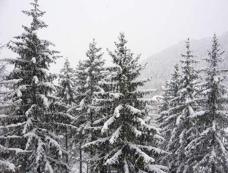 Alberi con neve  Archivio Fotografico - 8141162