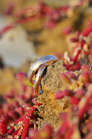rite: Vintage gold wedding rings are lying on a background of green buds ang corals Stock Photo