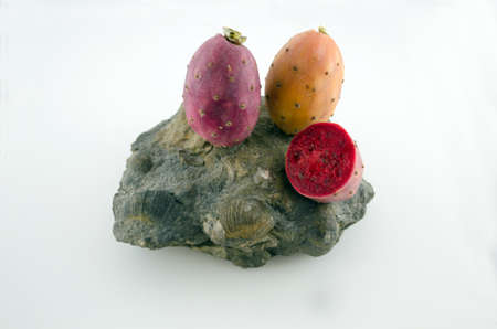 cowardly: Three prickly pears on a big stone