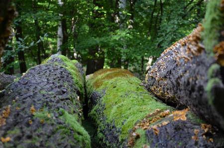 버섯과 이끼가있는 나무 줄기