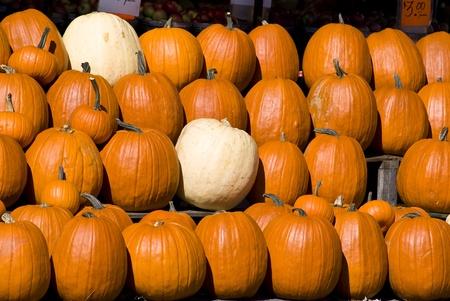 cultivator: Pumpkins Stock Photo