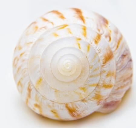 Shell Reklamní fotografie