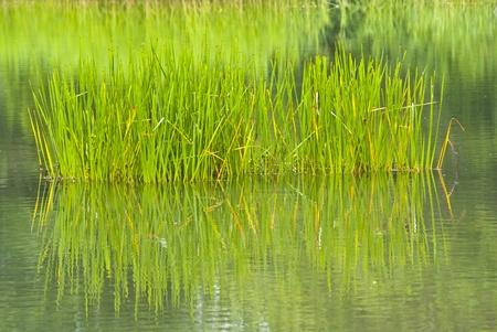 Grass Reklamní fotografie