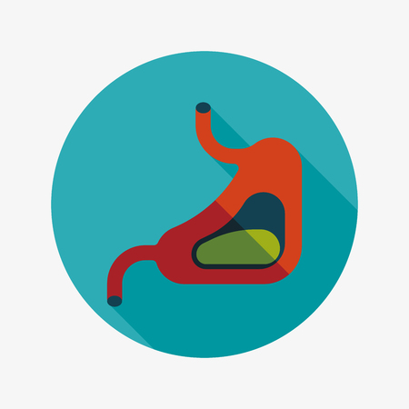 Human stomach flat icon with long shadow Vector