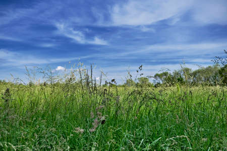 Tall grass and blue sky