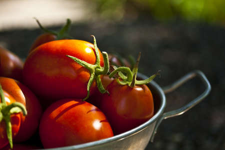 An old aluminum colander full of ripe Roma type tomatoes in the midday sun  Stock Photo