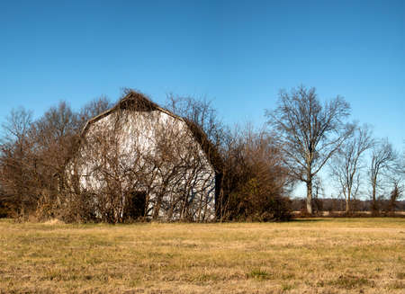 Front view of an abandoned vine covered barn taken in the winter. This building is being slowly reclaimed by nature and will be nothing but a pile of broken timbers and vines in just a few more years.