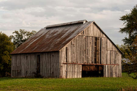 Late afternoon sun illuminates the front of a tobacco barn in western Kentucky.  Notice that the leaves have cured to a golden tan color. Under the watchful eye of the grower, the doors are opened and closed to control the humidity of the leaf.