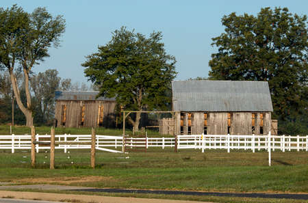 Two tobacco barns full of tobacco.  Note all of the open doors which control humidity.  This is a common sight in western Kentucky in the late summer.  These barns are found at the edge of town between a subdivision and a softball park. Stock Photo