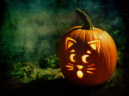 An artistic composition of a Halloween Jack-O-Lantern with a carved cat face design.