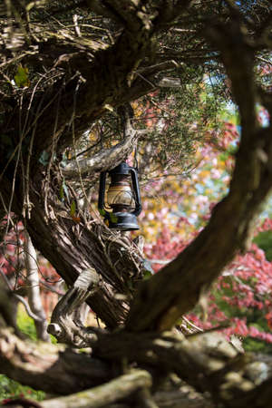 An old lantern hanging from a tree in a colorful spring garden.