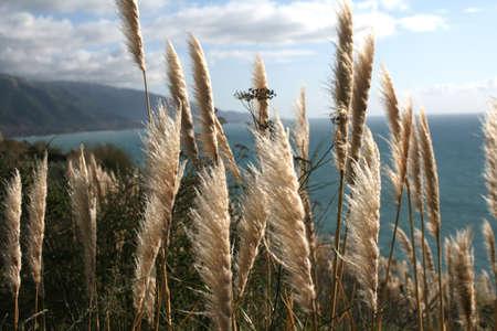 big sur: Big Sur Coastline