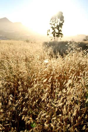 Grass Illumination