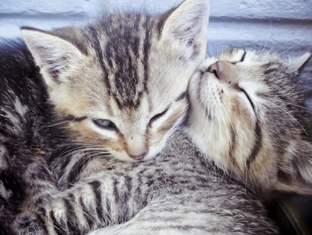 Two Adorable Tabby Kittens