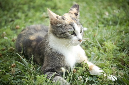 Cat Laying in the Grass with Ears Back Imagens