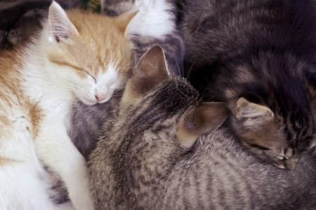Close Up of Furry Kittens Sleeping Together in a Pile 写真素材 - 118000704