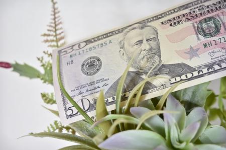 Fifty Dollar Bill with Green Succulent Plants Stock fotó
