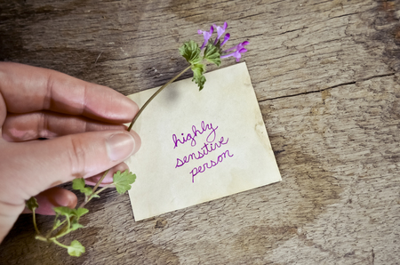 Highly Sensitive Person Written on Paper with Hand Holding a Delicate Flower Фото со стока
