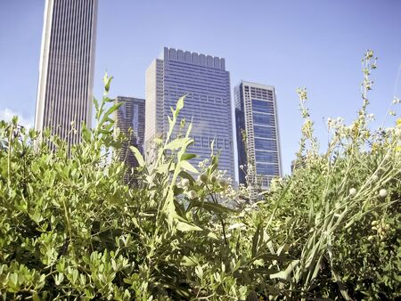 City Skyscrapers with Wild Plants in Foreground