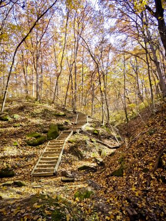 Forest Stairs in Autumn
